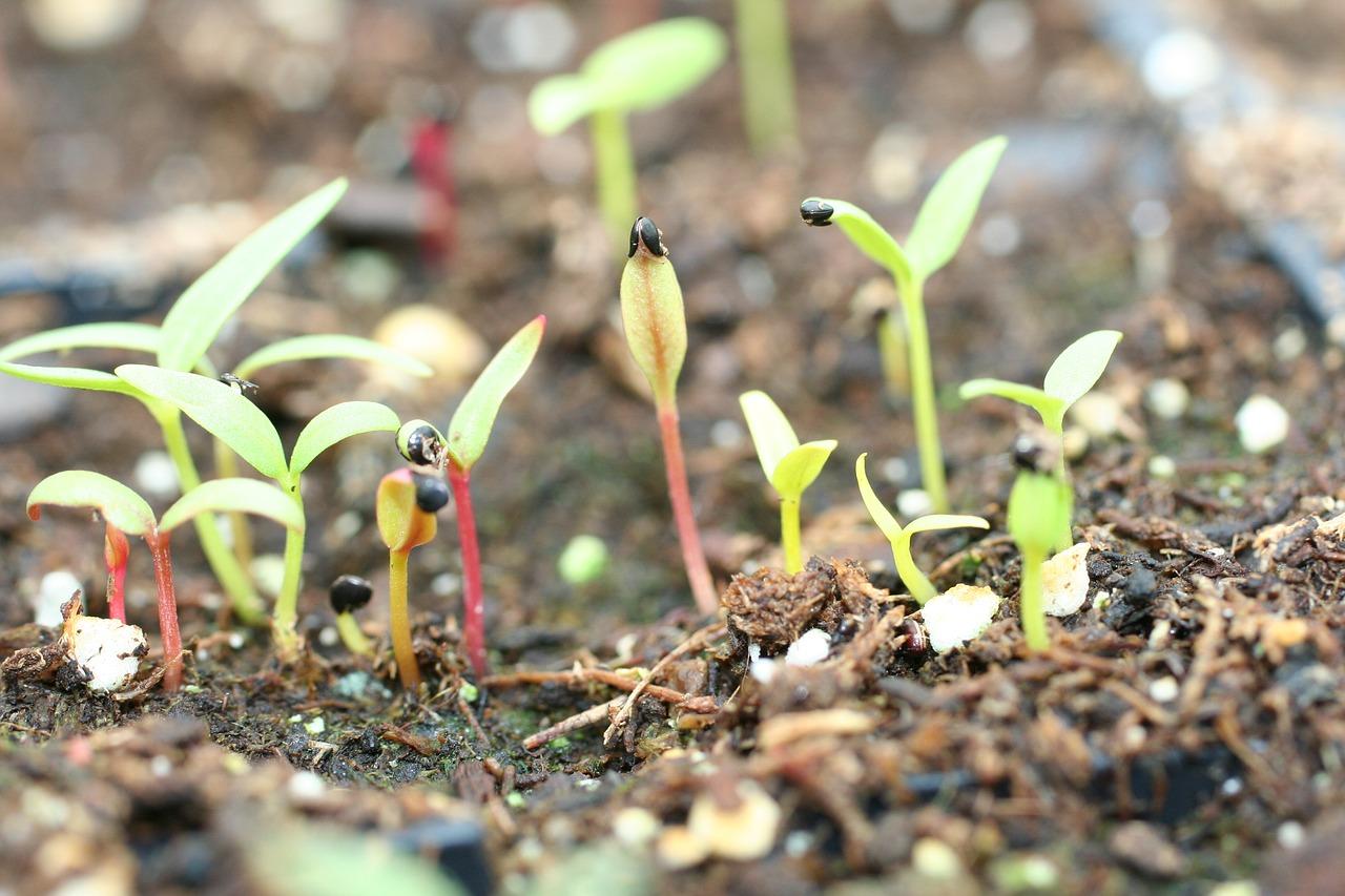 Poco a poco vamos germinando