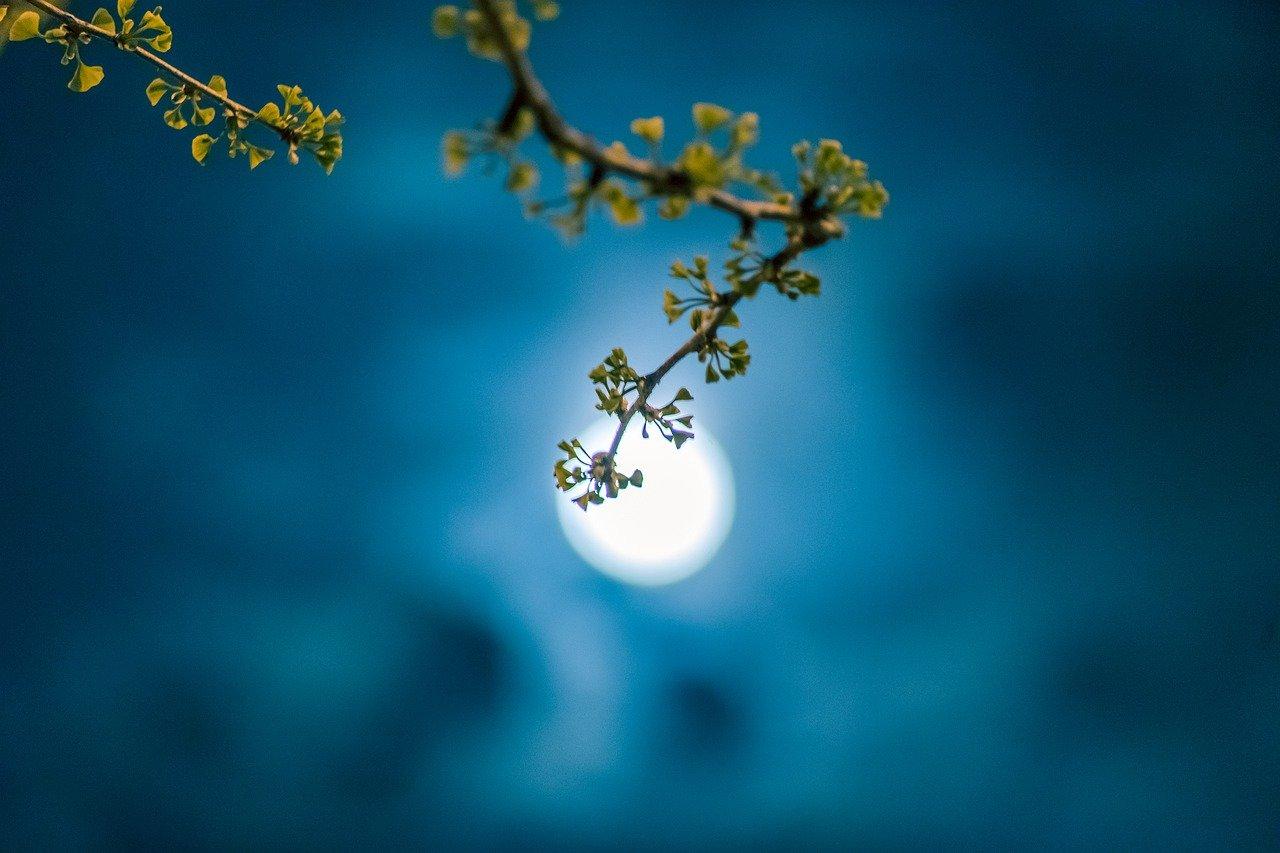 Semana de Luna Llena en Acuario y cambios energéticos
